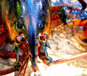 Le homard le roi des crustacés