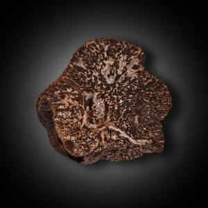 La truffe : Pépite d'or de la gastronomie.