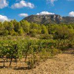 Un voyage dans le Sud de la France